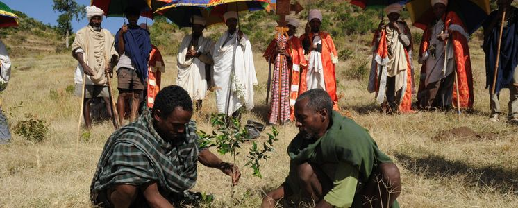 In Ethiopia a slope is being reforested: priests and monks of the nearby monastery Montogera have gathered at this symbolic planting of a church forest.