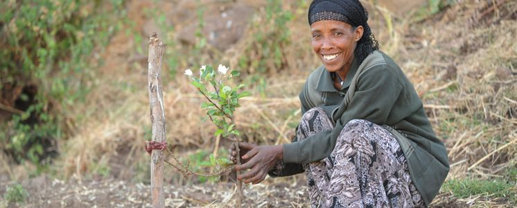 Yeshi Mehemed cares for an apple tree. Due to the shortened rainy season, our partner - the Mekane Yesus Church - helps farming families in the Ethiopian highlands to cope with the difficult living conditions.